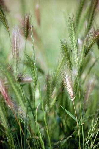 Free photos: Grass seeds