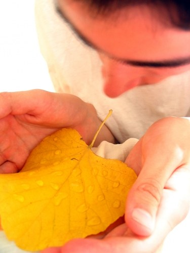 Man holding a yellow leaf