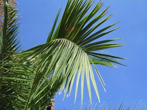 Palm tree leaf with sky in back
