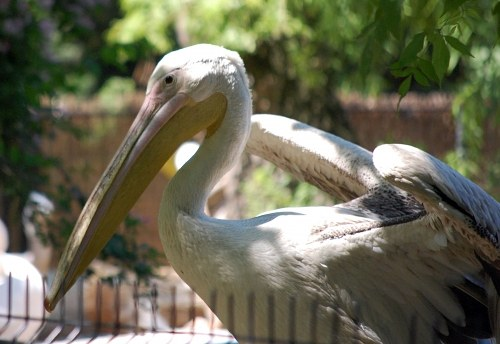 Free photos: Pelican near water