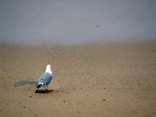 Seagull looking into the distant sea