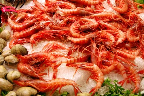 Shrimps over ice