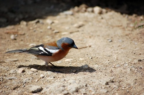 Free photos: Small bird on ground