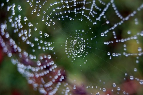 Spider web with water drops on it free photo
