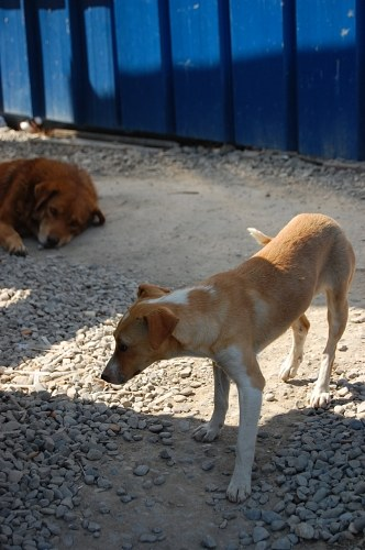 Free photos: Stray dogs behind some pallets