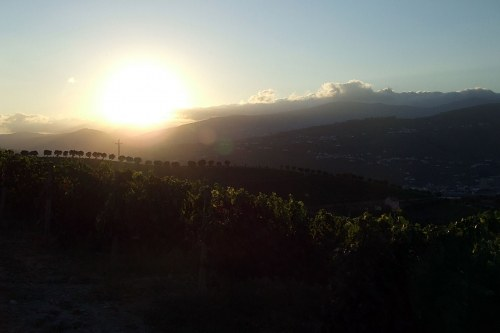 Free photos: Sunset over a vineyard