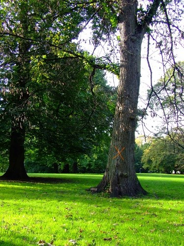 Free photos: Trees and bright green grass