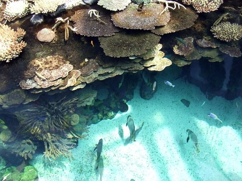 Tropical view of a coral reef