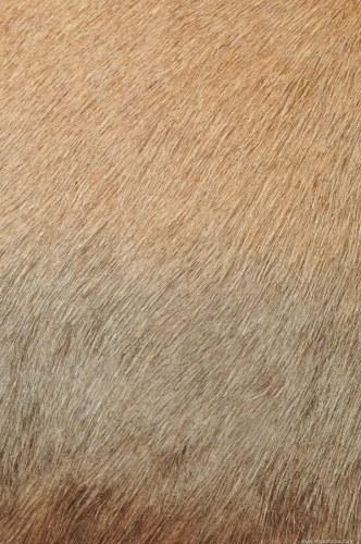 Animal fur surface