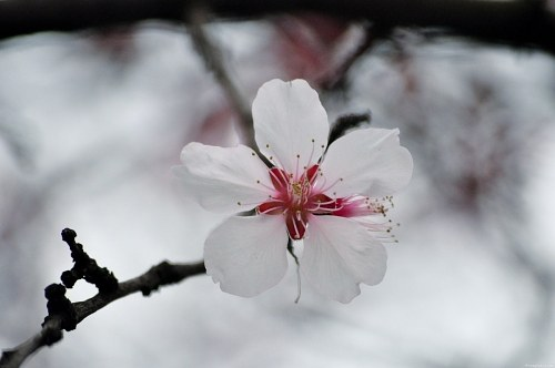 Free photos: Apple flower in bloom