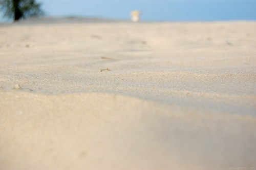 Free photos: Playa de arena macro