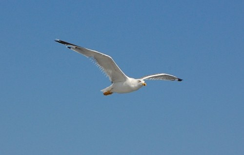 Free photos: Bird flying