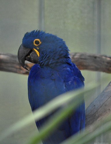 Bright Blue Parrot