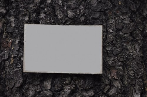 Blank card on tree bark
