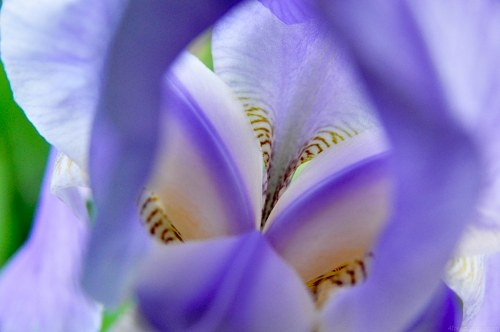 Free photos: Iris blu interni