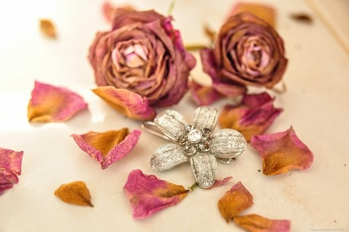 Rosas secas do Brooch