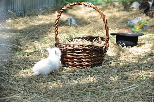 Free photos: Bunny basket an hat