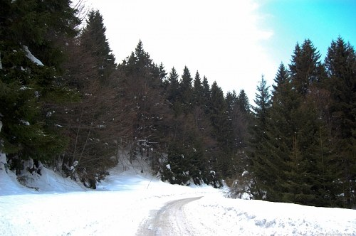 Free photos: Cold winter road