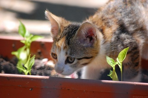 Free photos: Curious smart kitten