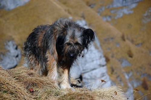 Free photos: Dog in the mountains