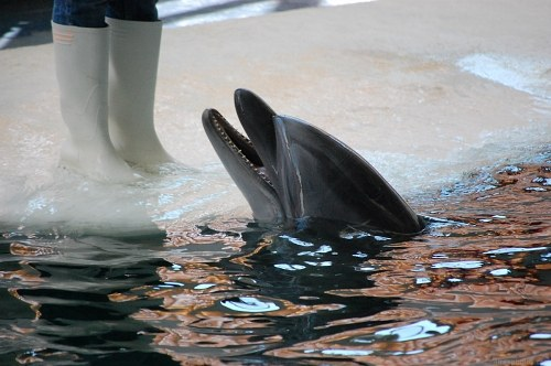 Free photos: Dolphin and trainer