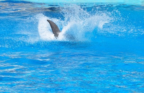 Dolphin fin splash
