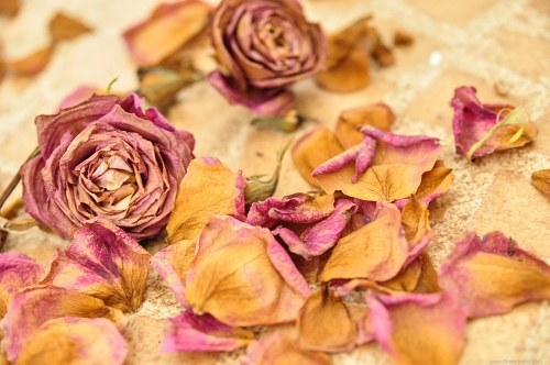 Dry roses on the floor