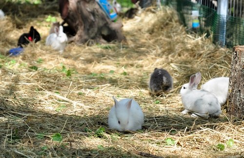 Free photos: Easter bunnies in grass