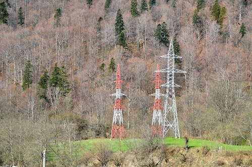 Electricity poles in a forest