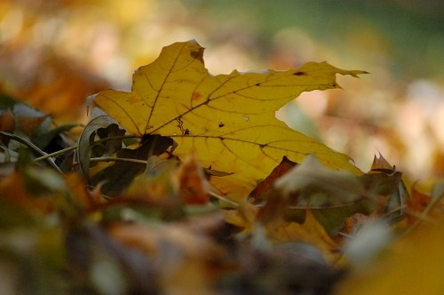 Fallen leaf on ground