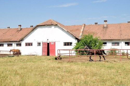 Farm stable with horses