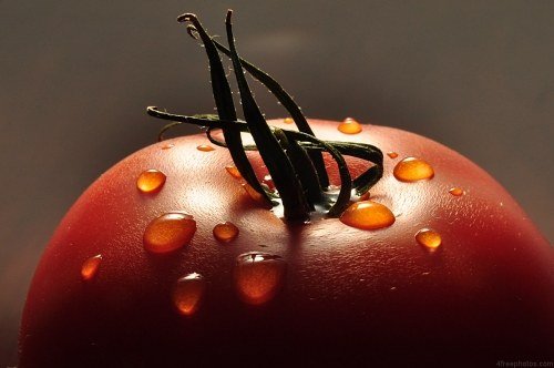 Free photos: Fresh wet tomato