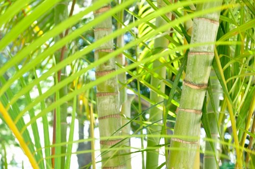 Free photos: Green bamboo closeup