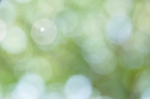 Free photos: Bokeh verde