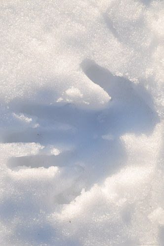 Hand mark in snow