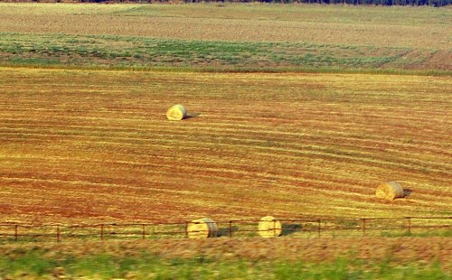 Free photos: Hay crops
