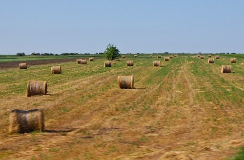 Free photos: Hay rouleaux