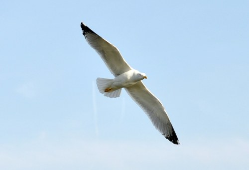 Free photos: Large bird flying