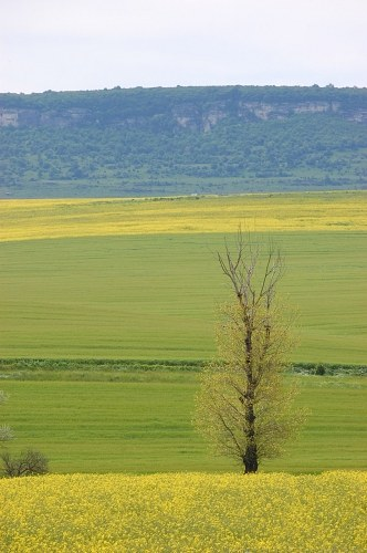 Free photos: Lonely tree in the field