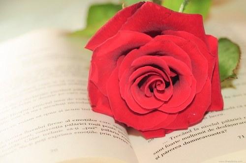 Love novel