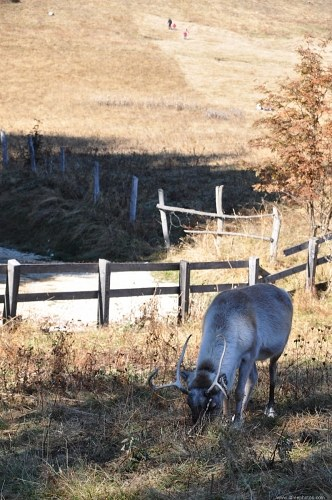 Free photos: Male deer eating grass
