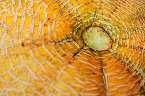 Free photos: Melon peel