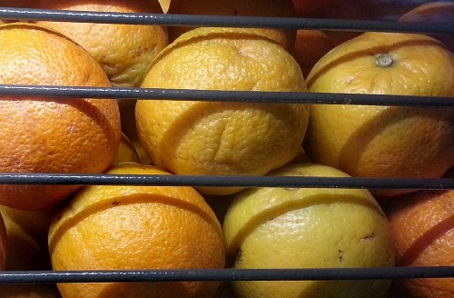 Oranges in a tray