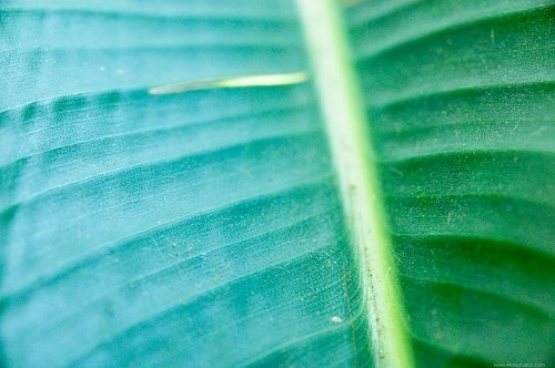 Free photos: Palm leaf detail
