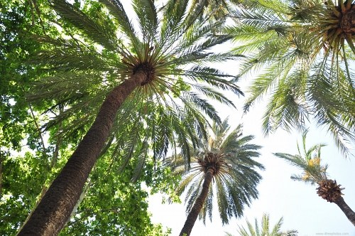 Free photos: Palm tree forest