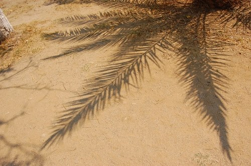 Palm tree shadow in sand