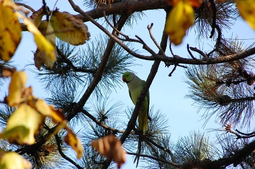 Free photos: Parrot in tree