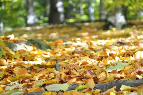 Path covered with leafs