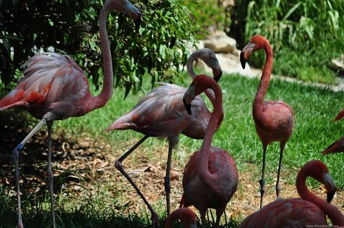 Pink flamingos in the shadow