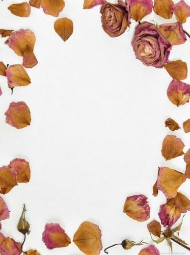 Roses framed paper
